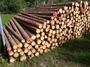 Regular stack of wood delivered directly from forestry